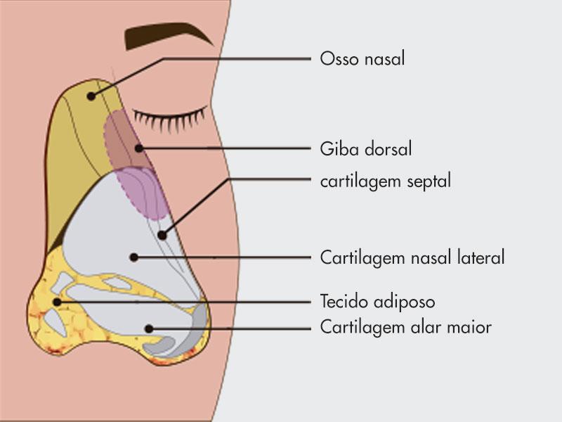 estrutura nariz